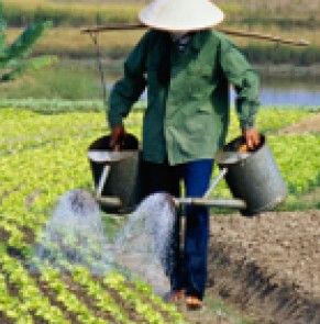 A new irrigation system for the rice fields